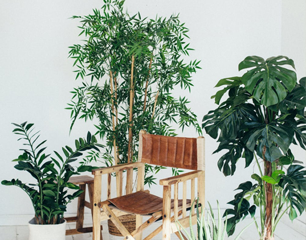 green potted plants surrounding a wooden chair